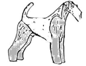 nákres strihu foxteriéra hrubosrstého na svoj požadovaný štandard   a mnoho  ďaľších nákresov -dostanete k dispozícii ab510829370